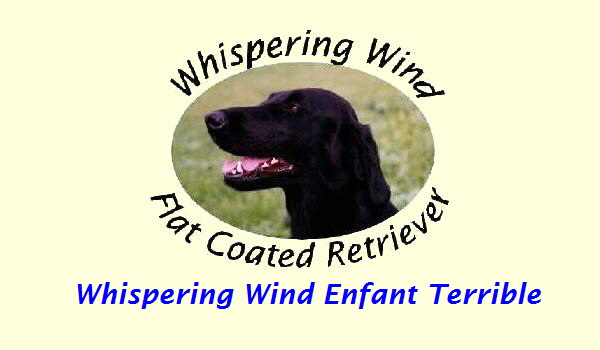 Whispering Wind Enfant Terrible