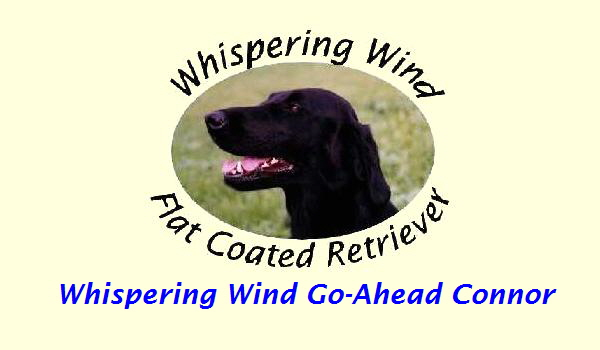 Whispering Wind Go-Ahead Connor