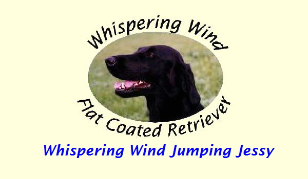 Whispering Wind Jumping Jessy