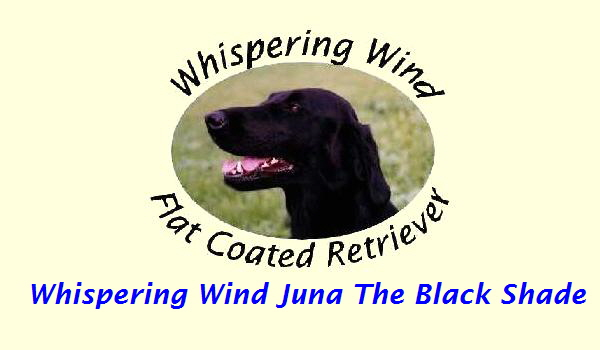 Whispering Wind Juna The Black Shade