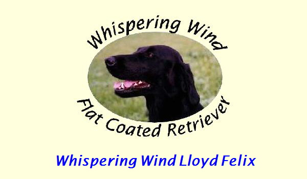 Whispering Wind Lloyd Felix