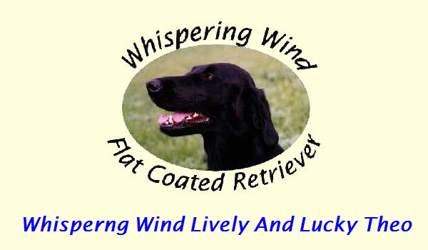 Whisperng Wind Lively And Lucky Theo